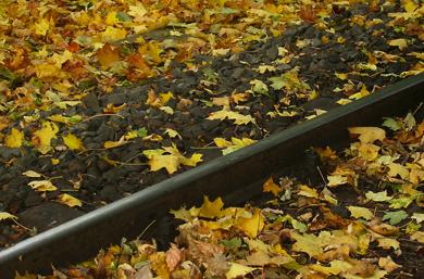 Laub zwischen den Schienen der Schmalspurbahn