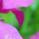 28. Woche 07.07. - 13.07.2008 :: Farbenfroh