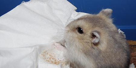 Lilo und das Taschentuch
