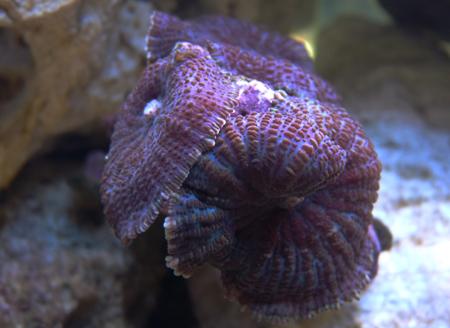 aquarium_blueten