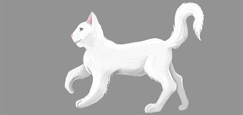 2011-03-18_cat4