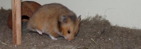 hamster04