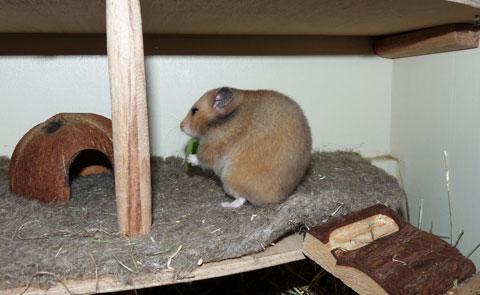 hamster06