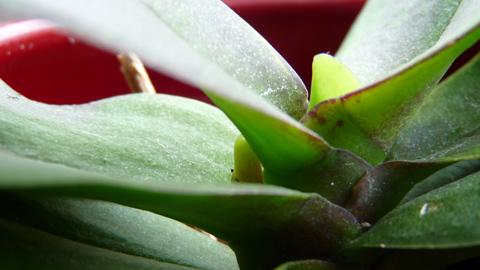 orchideen02