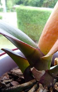 orchideen06