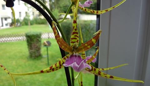 orchideen31