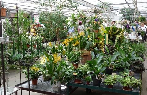 orchideenhaus_celle2