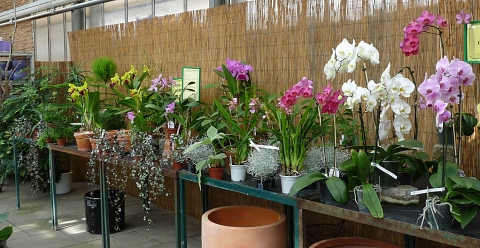 orchideenhaus_celle3