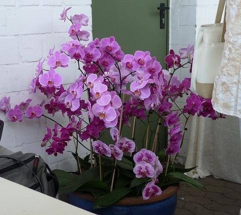 orchideenhaus_celle4