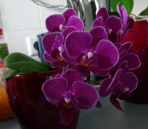 orchideen archives gedankenfreier fall. Black Bedroom Furniture Sets. Home Design Ideas