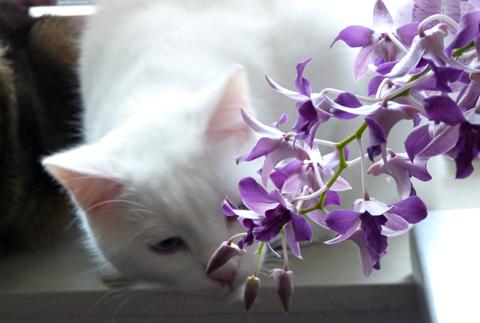 gismo und die orchideen gedankenfreier fall. Black Bedroom Furniture Sets. Home Design Ideas