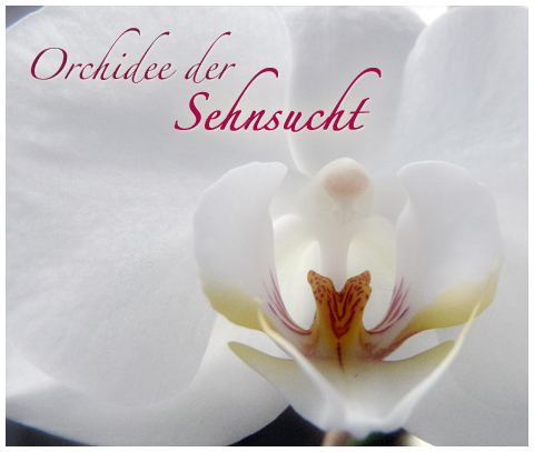 honigtau an orchideen