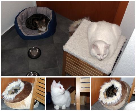 Katzen in der Silvesternacht