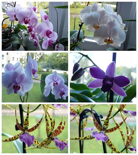 Blütenpracht im September