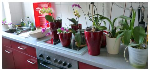 Tauchen der Orchideen in der Küche