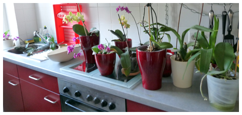 orchideen tauchen orchideen tauchen so einfach geht 39 s. Black Bedroom Furniture Sets. Home Design Ideas