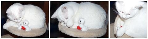 Drei weiße Kätzchen