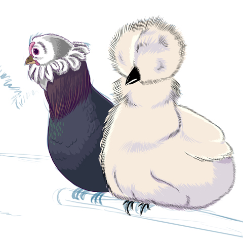 Leben auf der Farm: Hühner