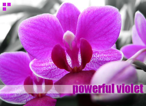 Color me happy: Powerful Violet