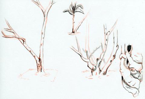 Skizzen aus dem Garten