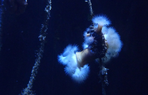 Aquarium im Ozeaneum