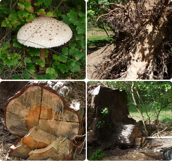 Pilz und Baum