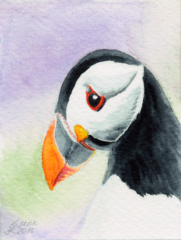 Papageientaucher / Puffin