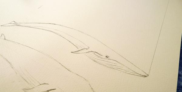 Bleistiftskizze der ersten Wale