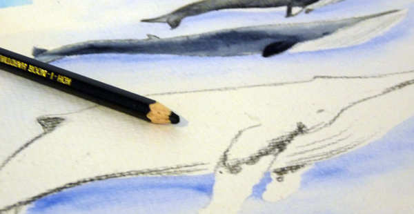Aquarellbuntstifte für Feinheiten