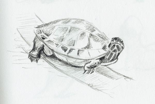 Zeichnung einer Schildkröte